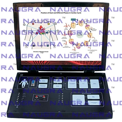 12 Lead Real Time ECG Trainer for Bio Medical Teaching Labs